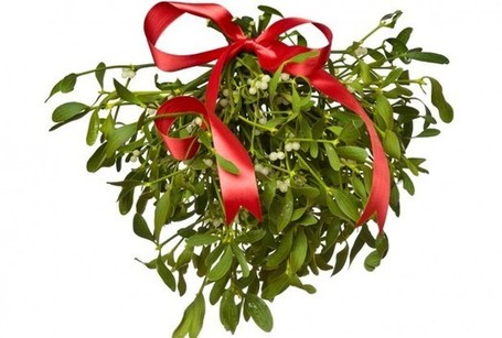 Mistletoe Extract Shows Promise As Colon Cancer Treatment | Plantsheal | Scoop.it