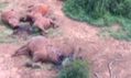 Kenya trials text message alerts in bid to curb poaching after entire family of 11 elephants wiped out VIDEO | Biodiversity IS Life -- Conservation,Ecosystems,Wildlife,Rivers,Water,Forests | Scoop.it