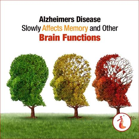 Alzheimers Disease Slowly Affects Memory and Other Brain Functions | Health Infographics | Scoop.it