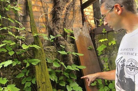 Climate change is making poison ivy grow bigger and badder | Sustain Our Earth | Scoop.it