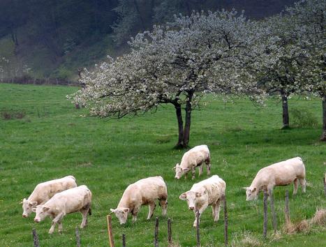 L'innovation en systèmes fourragers et élevages d'herbivores : un champ de possibles   AGRONOMIE VEGETAL   Scoop.it