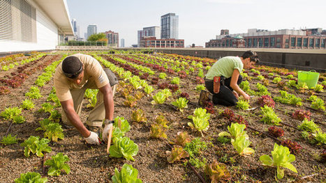 Rooftop Farming Is Getting Off The Ground | Geography education in Australia | Scoop.it