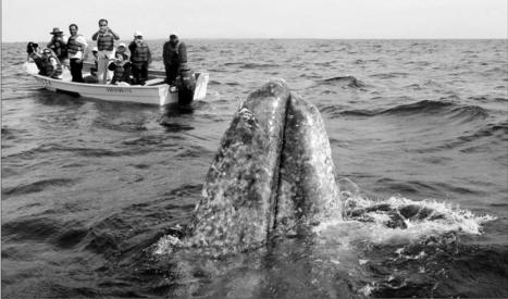 Please don't blame the whales | Dolphins | Scoop.it