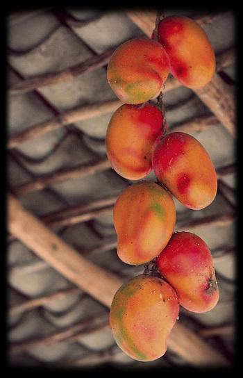Fresh Fruit Frappé | Garden and Outdoor Australia 2 | Scoop.it