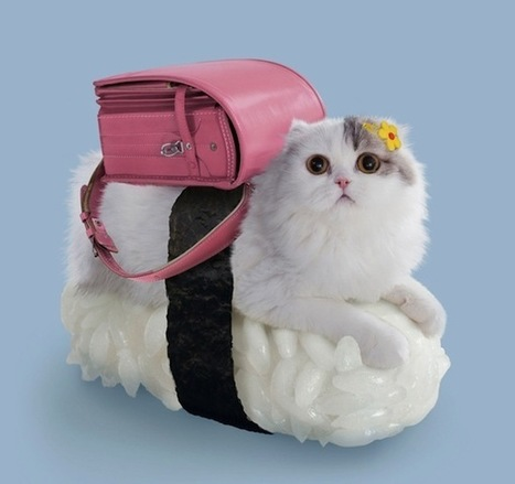 Bizarre But Adorable Pictures Of Cats Dressed To Look Like Sushi - DesignTAXI.com | A Cat's Life | Scoop.it