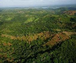 Tropical forests 'fix' themselves | Sustain Our Earth | Scoop.it