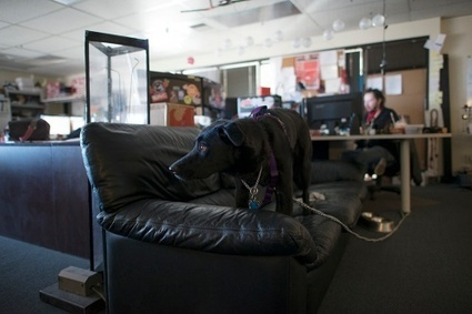 Refining the Office Dog Policy | Dogs | Scoop.it