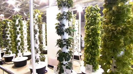 Aeroponic Towers Grow Veggies Inside O'Hare Airport | Vertical Farm - Food Factory | Scoop.it