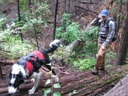 """Conservation Canines"" advancing environmental research ... 