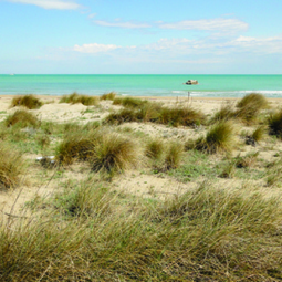Changes in plant species composition of coastal dune over 20-years   GarryRogers NatCon News   Scoop.it