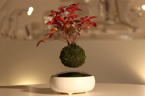 Introducing Air Bonsai: The Floating Tree | Ca m'interpelle... | Scoop.it