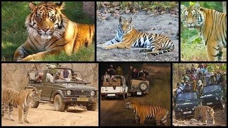 The Earth Safari: Get Exclusive Experience of Tiger Safari In India   Safaris in India & Africa   Scoop.it