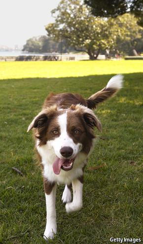Canines have lateralised brains — just like people | Gavagai | Scoop.it