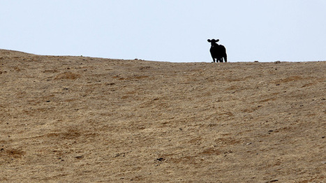 California drought deepens as another year's rains stay away | Sustain Our Earth | Scoop.it
