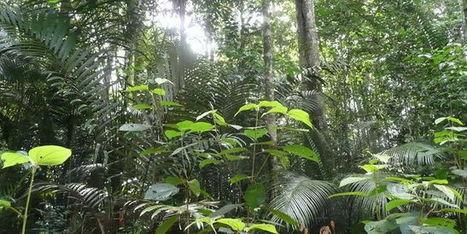 La déforestation favorise l'émergence de nouvelles maladies | Salud Publica | Scoop.it