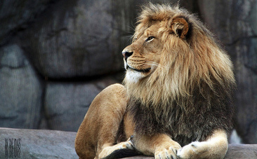5 Reasons You Should Boycott the Zoo | Zoos should not exist | Scoop.it