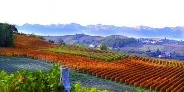 Barolo's golden age | Vitabella Wine Daily Gossip | Scoop.it