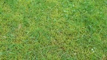 Turf Supplies - Valuable Information   The Best Tips About Finding Turf Supplies in Melbourne   Scoop.it
