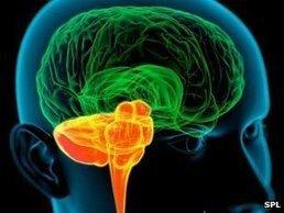 Bilingualism 'enriches the brain' | 21st Century World Language Teaching | Scoop.it