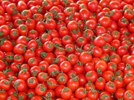 Québec : Être souverain en alimentation, une priorité | Questions de développement ... | Scoop.it
