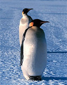 Antarctica Animals | Antarctica | Scoop.it