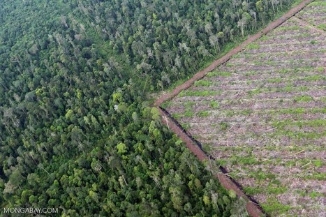 World's largest sovereign wealth fund just dropped 11 companies over deforestation | Timberland Investment | Scoop.it