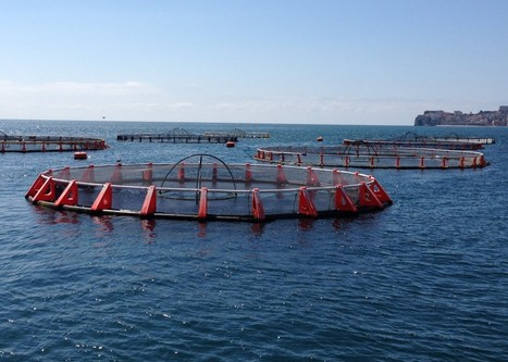World Fishing & Aquaculture - Fish farming is still the future | News on the Fisheries and Aquaculture field | Scoop.it