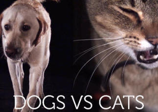 Cats and dogs drinking in super slow-motion   Pet News   Scoop.it