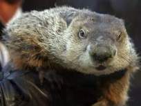 Punxsutawney Phil 'indicted' in chilly Ohio   Digging The Earth   Scoop.it