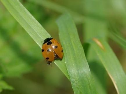 Le Monde et nous - Biodiversité - Découverte du bassin minier : la biodiversité au-travers des coccinelles ! | CAP21 Le Rassemblement Citoyen | Scoop.it