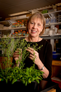 Solving molecular mysteries | CALS News Center Solving molecular mysteries | Research from the NC Agricultural Research Service | Scoop.it