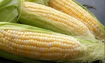 Nigeria Invents, Releases New, Special Maize Varieties | MAIZE | Scoop.it