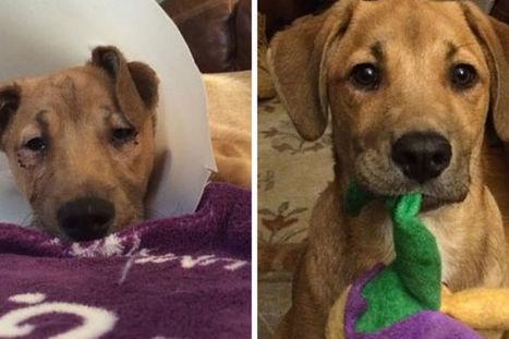 10 cani salvati. La loro trasformazione ti riempirà il cuore | My Pet's Hero | Scoop.it