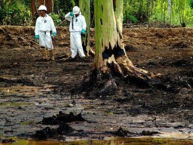 La fitorremediación: plantas para tratar la contaminación ambiental   Medio ambiente   Scoop.it