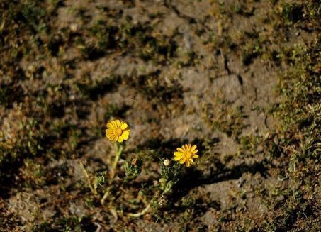 Complètement à sec, la Californie rationne l'eau | Biodiversité & Relations Homme - Nature - Environnement : Un Scoop.it du Muséum de Toulouse | Scoop.it