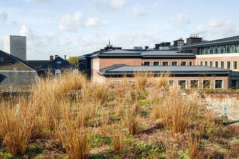 La nature en ville: un jardin sur le toit en plein coeur de Bruxelles | Nature en ville et Biodiversité | Scoop.it