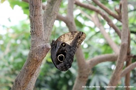 Galería fotográfica: mariposas | Afán por saber | Bichos en Clase | Scoop.it