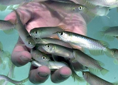 Los peces actúan de centinelas de la calidad del agua | Las personas y el medio ambiente | Scoop.it
