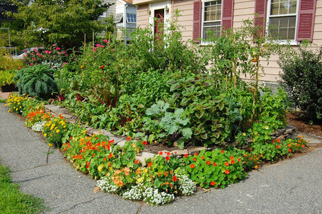 Open Air Life - by Nilsen Landscape Design: Edible Gardening - An Interview with Ben Barkan from HomeHarvest   Simply Grow Great Food   Scoop.it