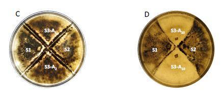 Asexual reproduction induces a rapid and permanent loss of sexual reproduction capacity in the rice fungal pathogen, Magnaporthe oryzae: results of in vitro experimental evolution assays. BMC Evolu... | lifesciences | Scoop.it