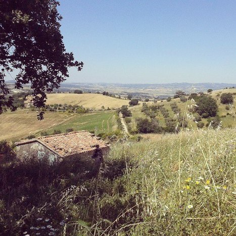 Southern Tuscany - Map It Out!: BIODYNAMIC VINEYARD LA MALIOSA: AN INTERVIEW WITH ANTONELLA MANULI | Vinitours | Scoop.it