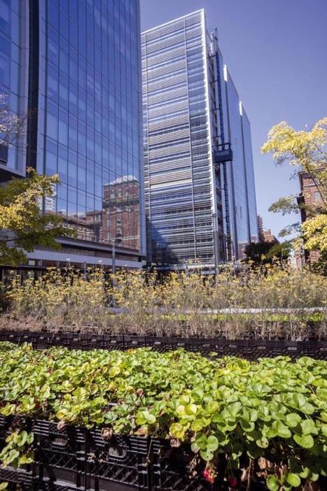 Pourquoi manger belge? Pour réimplanter l'agriculture dans la ville | Agriculture urbaine et rooftop | Scoop.it