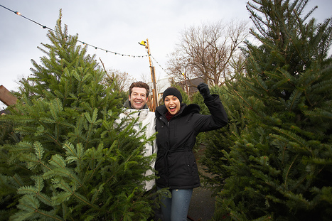 Summer Drought had little Impact on Prices of Christmas trees in Indiana, Michigan   Christmas Trees and More   Scoop.it