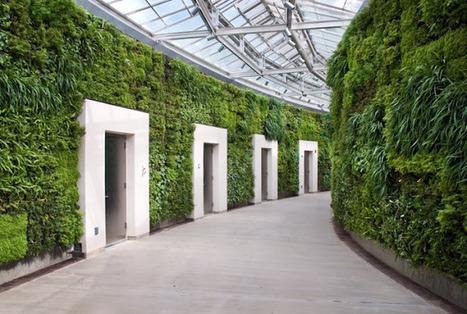 Blog Medioambiente.org: Pared verde más grande de Estados Unidos   Cultivos Hidropónicos   Scoop.it