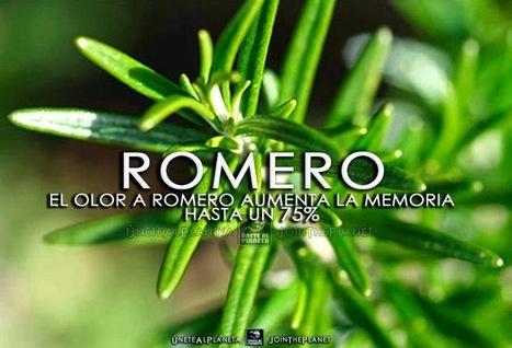EL OLOR A ROMERO AUMENTA LA MEMORIA HASTA UN 75%   Morocha   Scoop.it