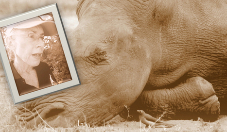 Traumatized Humans: Another Rhino Crisis Fallout (Part 1) | Help save our Rhino | Scoop.it