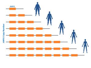La piste de la salive dans la génétique de l'obésité - Communiqués et dossiers de presse - CNRS   PSYCHOMOTRICITÉ et TCA   Scoop.it