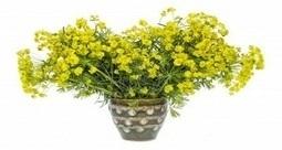 Jardinage Blog : de l'information sur le jardinage et des conseils pratiques sur les arbres, arbustes, fleurs, légumes, le sol, plantation, entretien du jardin... | bons plans | Scoop.it