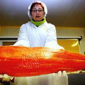 Le paradoxe du saumon | Pisciculture - Aquaculture | Scoop.it