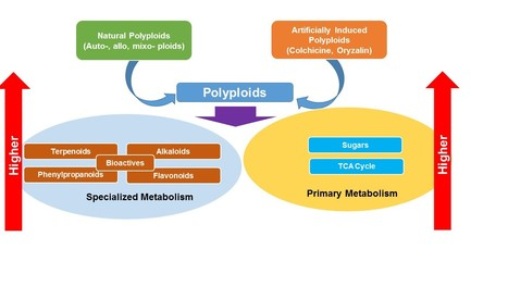 Is a plant's ploidy status reflected in its metabolome? | Plant Metabolomics | Scoop.it